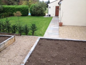 lawn from seed